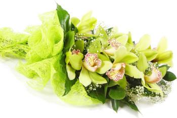 Зелені орхідеї