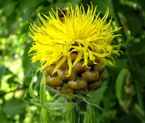 Любим комнатные цветы живую природу и