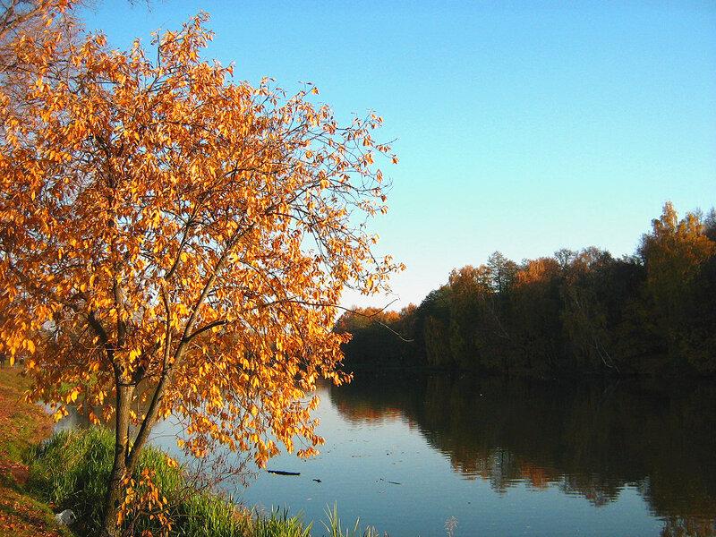 Багряное деревце у прида