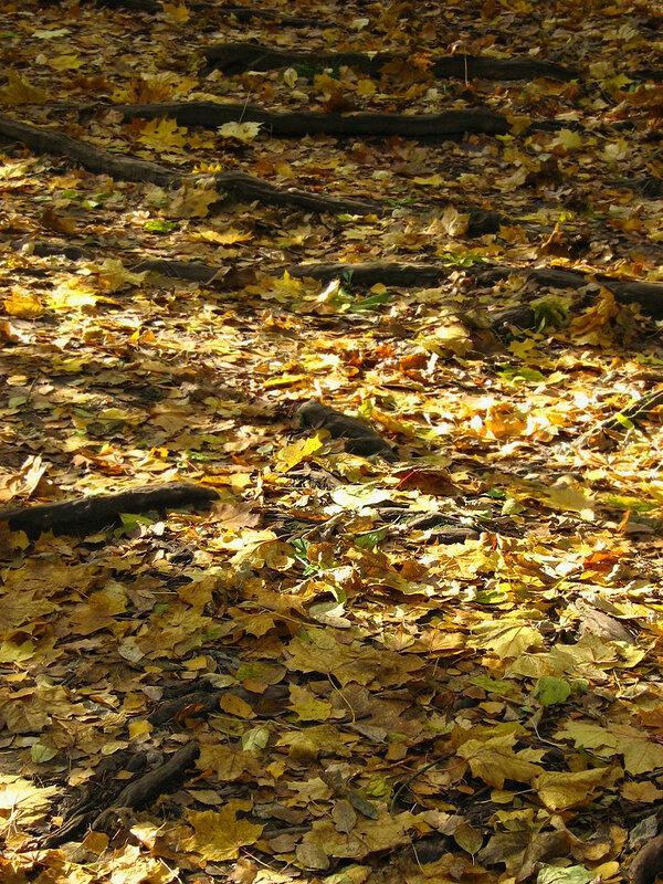 Золотая листва и корни древьев