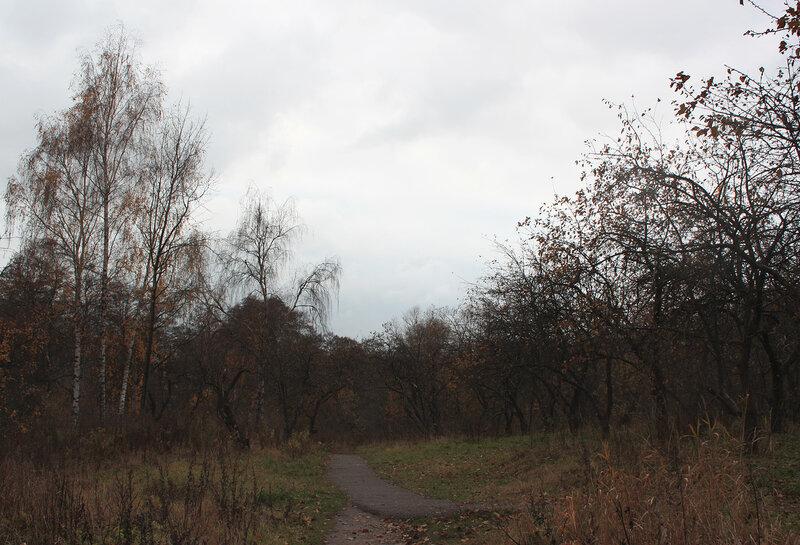 Яблоневый сад по осени