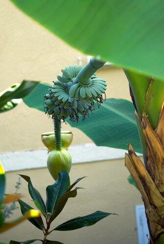 свежие бананы