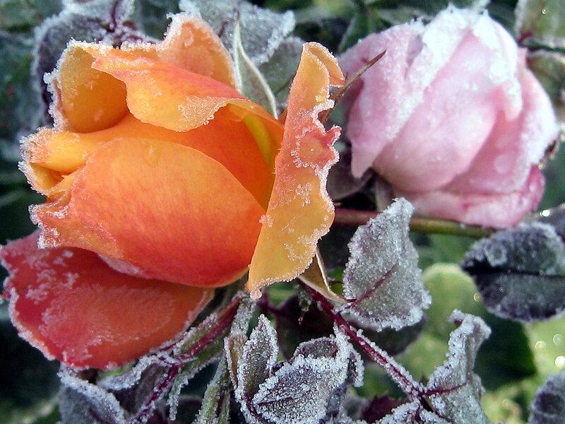 Замороженная красота 4