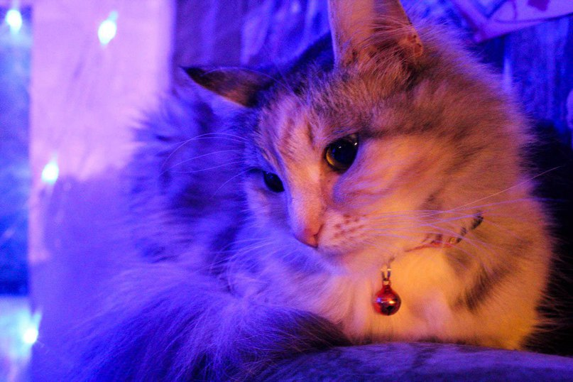 кошка-7.jpg