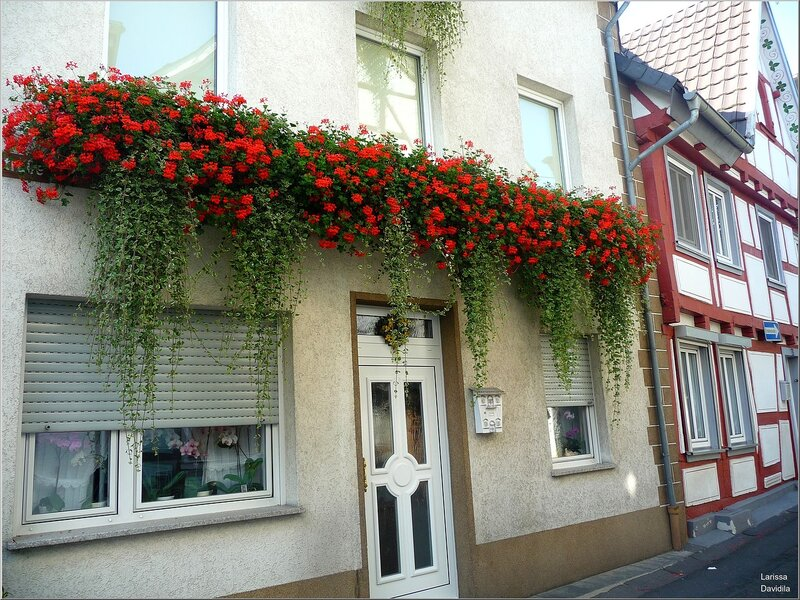 Как украсить фасад дома цветами своими руками 85