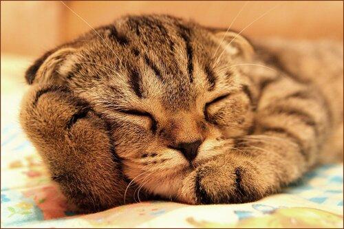 А зачем мне подушка?...
