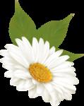 цветы-(278).png