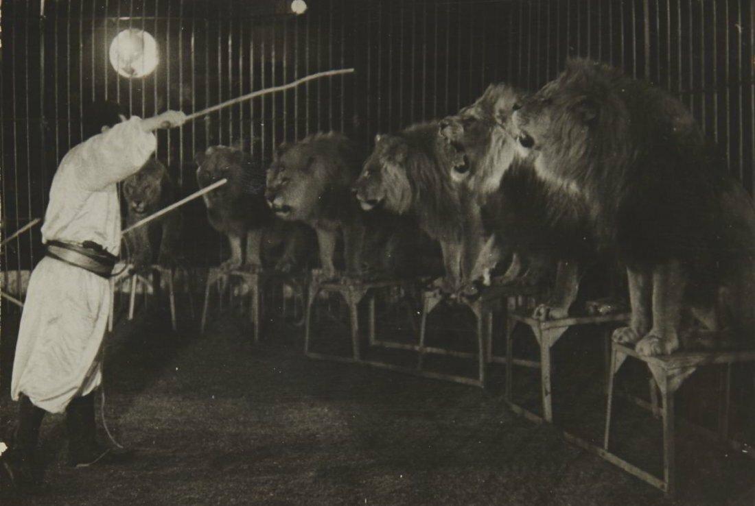 1939. Львы на арене цирка