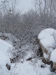 Кустарники облепихи, растущие между камней, лежащих рядом с карьером