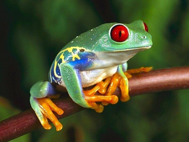 Задумчивый лягушонок