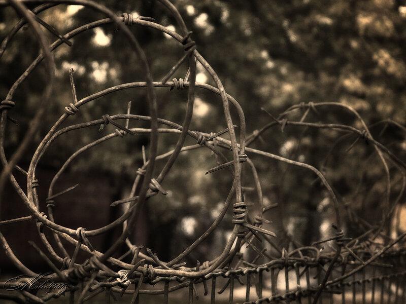 Мирное сосуществование по обе стороны ограды