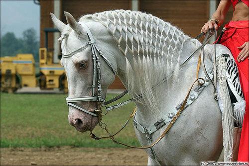 """Схема вышивки  """"Конь в белой уздечке """": таблица цветов."""