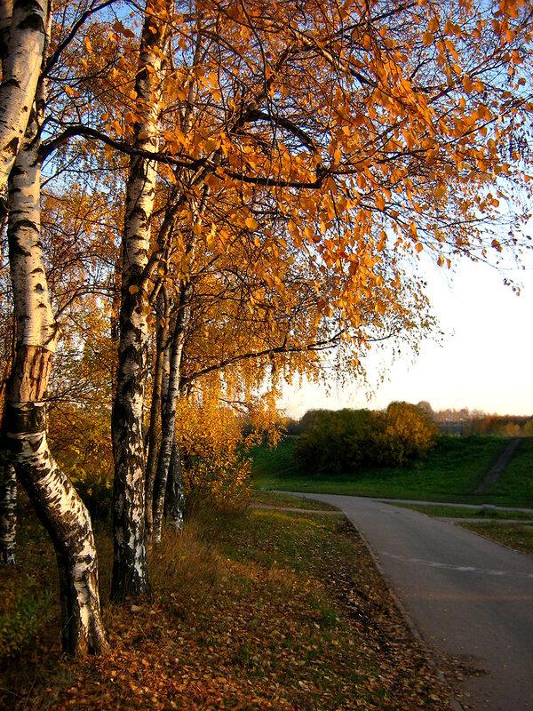Березы. осень