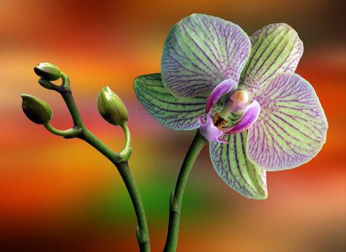 Аромат орхидеи (притча) | Поэзия ...: poezia-aromatov.ru/?p=259