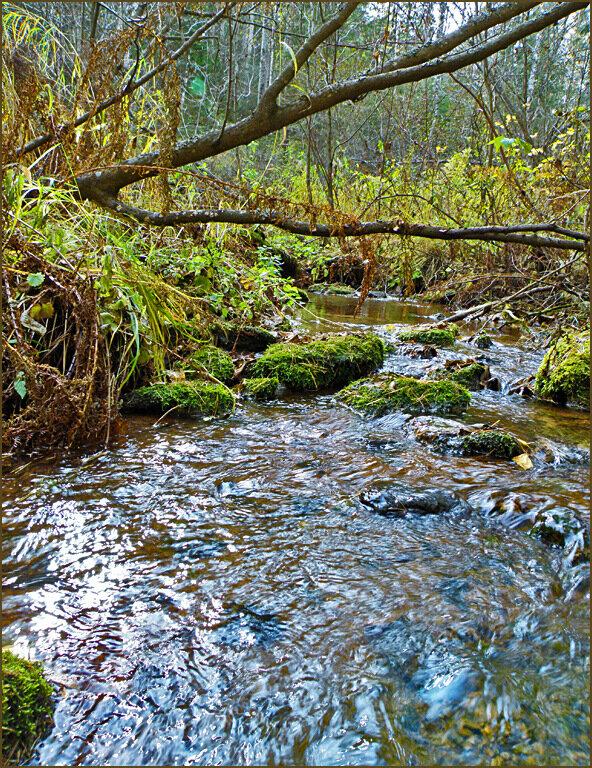 Цветная вода Мохового