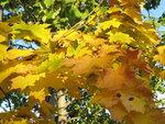Осень-52.jpg