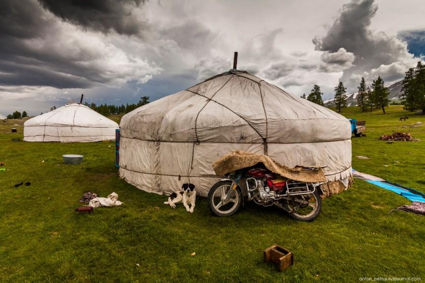 9. В гости к монголам мы попали очень вовремя — как раз во время вечернего доения. Поразило, что зан