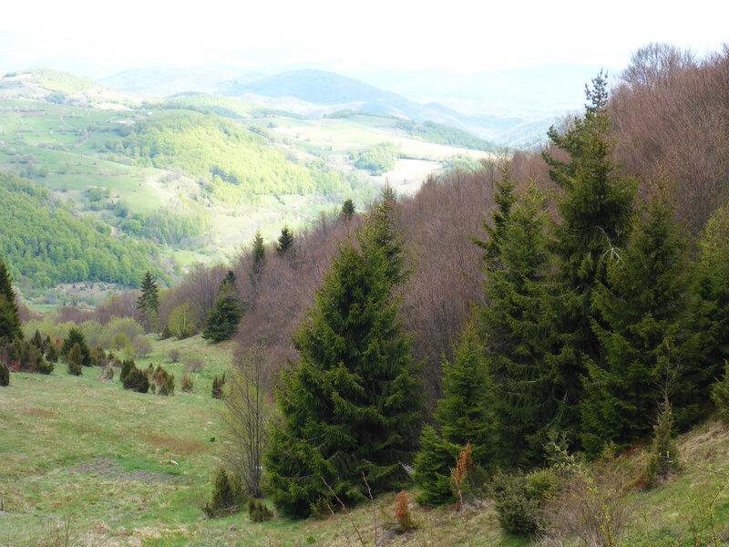 весенний пейзаж в мае в горах в парке голия (голиjа)