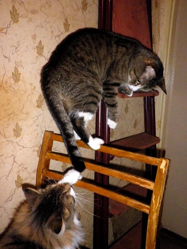 акробатика на стуле