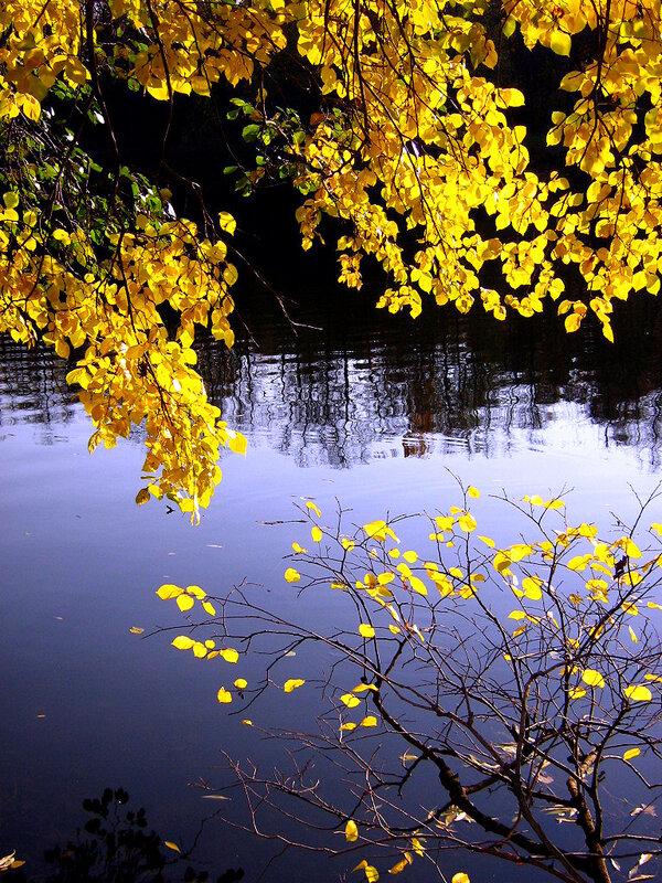 Золото листвы у фиолетовой глади дальнего пруда