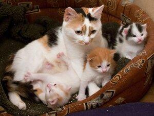 Муши и ее дети