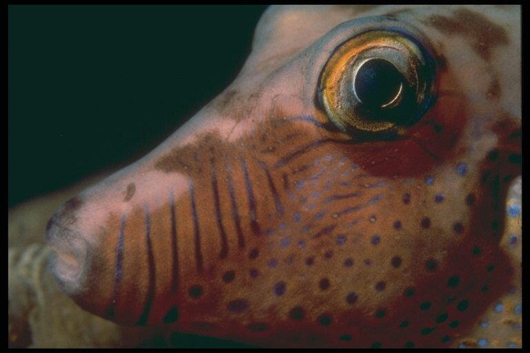 Fish eyes .Глаза рыб