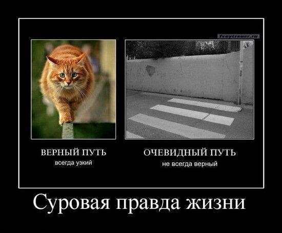 http://img-fotki.yandex.ru/get/3903/yes06.78/0_1914a_43a83836_XL.jpg