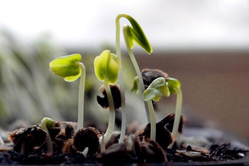 Как выращивать рассаду томатов, перцев и баклажанов