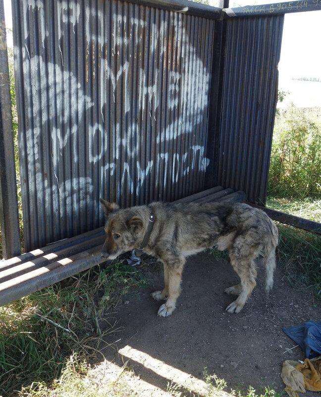 пес на остановке у села Ржаво