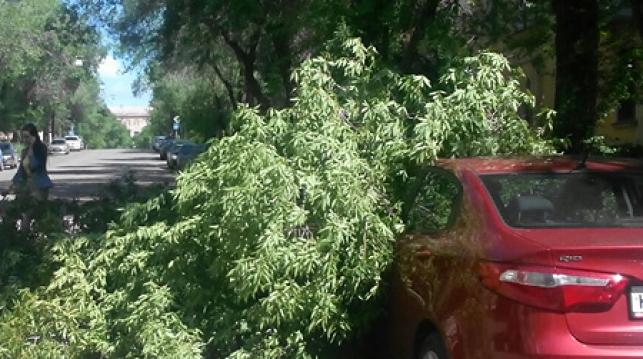 Сорванные крыши, упавшие деревья и подтопления. На Могилев вылилась почти месячная норма осадков