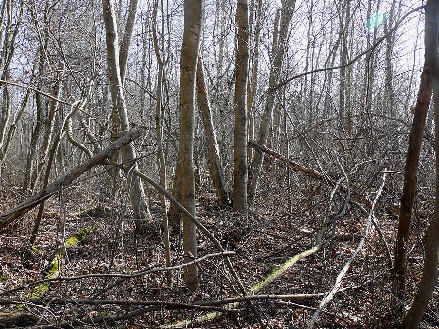 Лес грязный.jpg