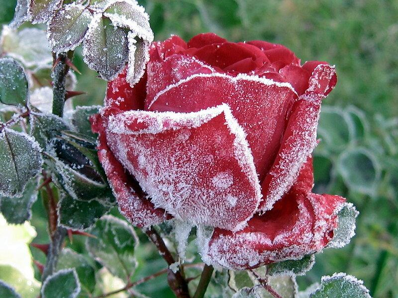 Замороженная красота 5
