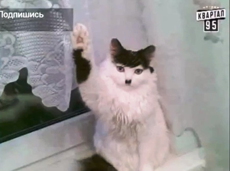 кот сигнал потерян картинка
