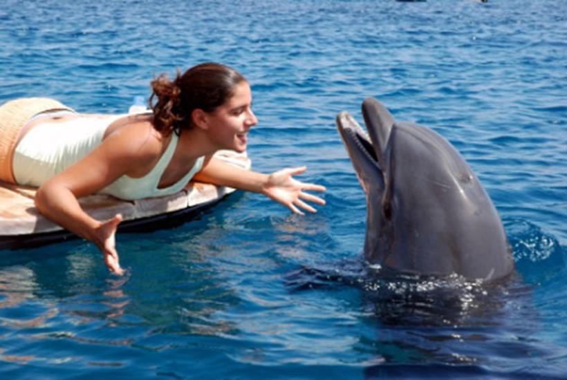 Беременная женщина и дельфин акушер 0 12e23b c1ac1590 orig