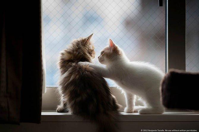 кошки  Дейзи и Ханна