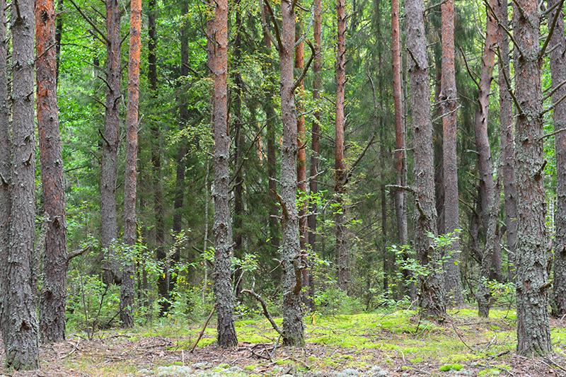 осень 15 лес