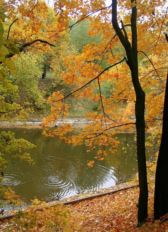 Рыжая осень...