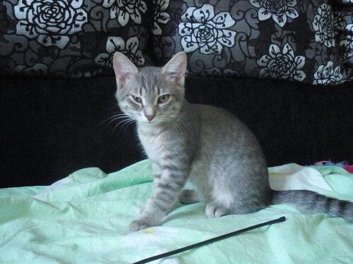Просмотр котят на продажу на сайте приюта блю голден стар работа на круизных судах в казино