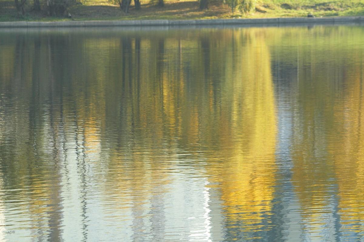 Пруд у Каменной плотины (Мосфильмовский пруд, Гладышевское озеро)