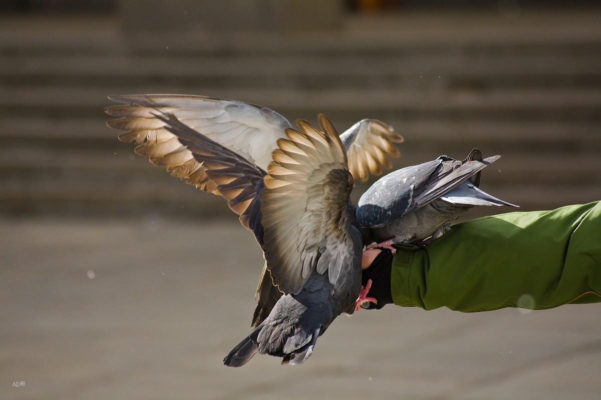 Мартовские голуби