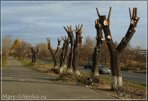 деревья челябинск