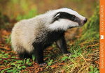 Фауна Беларуси / Fauna of BELARUS