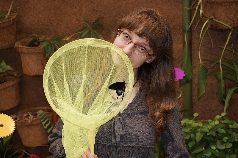 Парусник Papilio Lowi и я