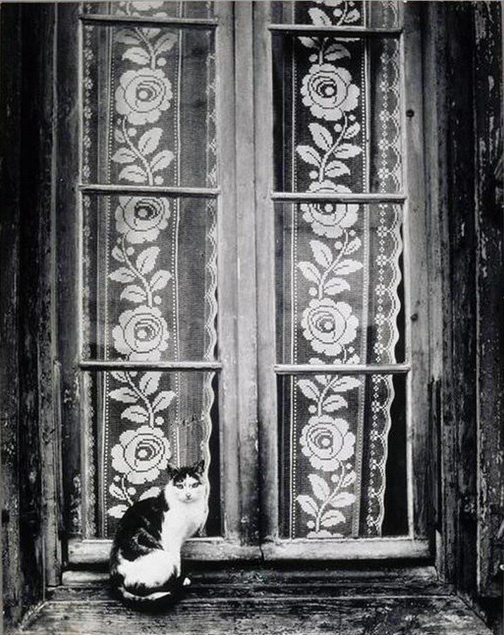 1937. Кот перед кружевными занавесками