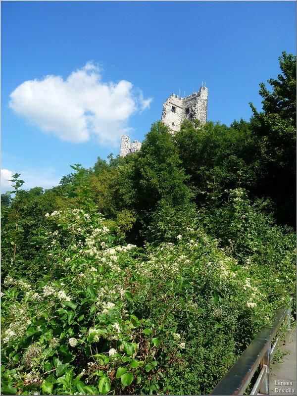 Развалины замка Драхенфельс