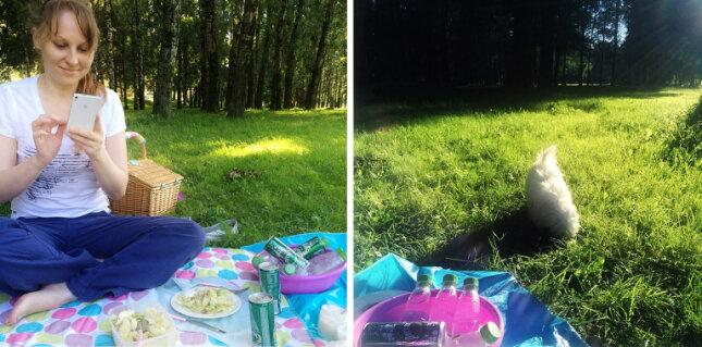 picnic6 copy.jpg