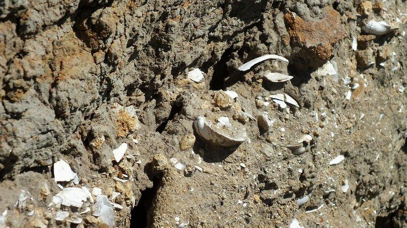 Окаменевшие раковины моллюсков
