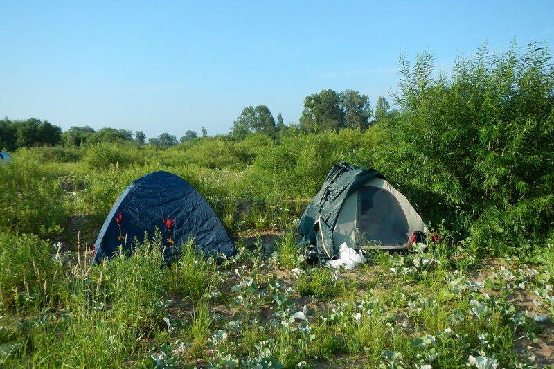 две палатки под кустом
