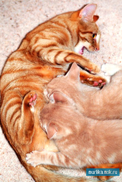 Продолжение рода кошки