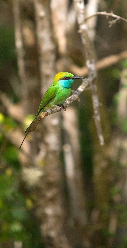 Зеленая птица.